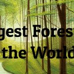 10 Largest Forests in the World