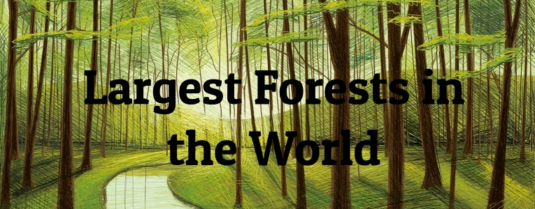10 Largest Forests in the World | Largest org