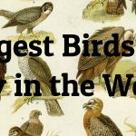 7 Largest Birds of Prey in the World