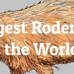 Largest Rodents in the World