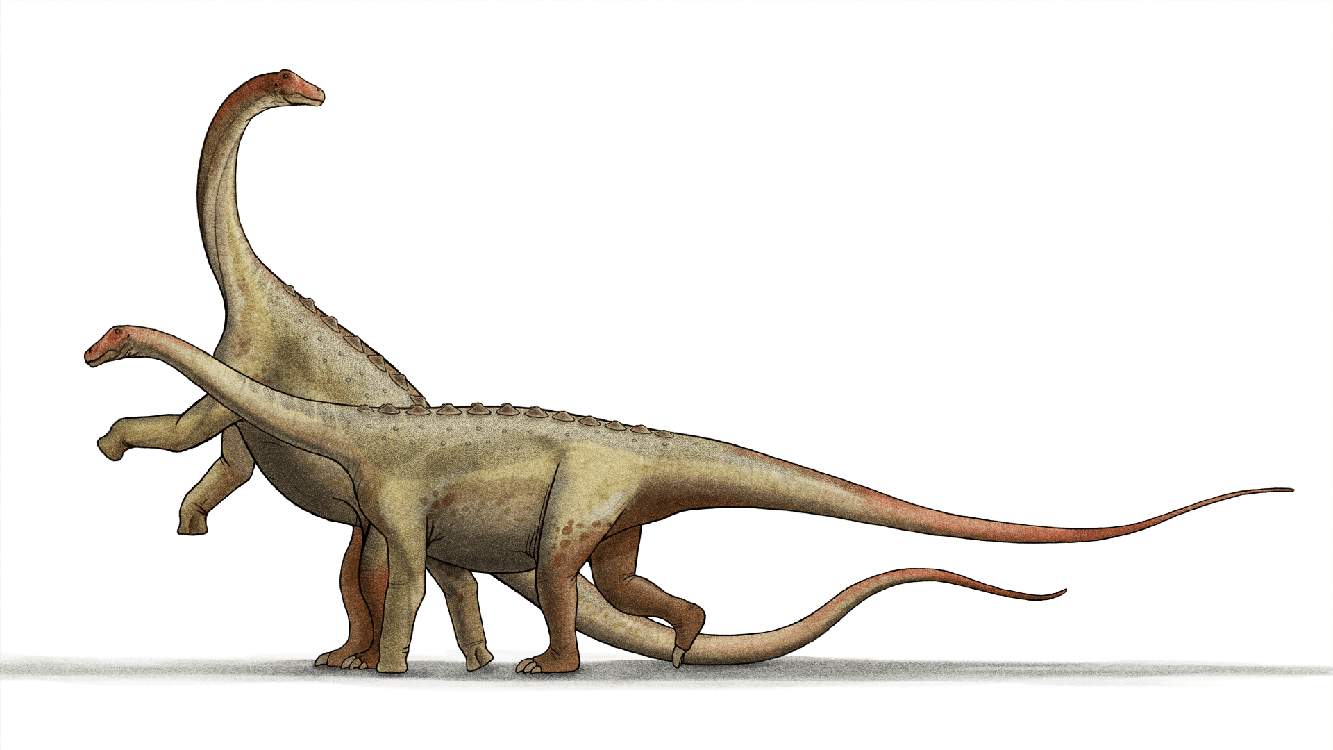 Saltasaurus
