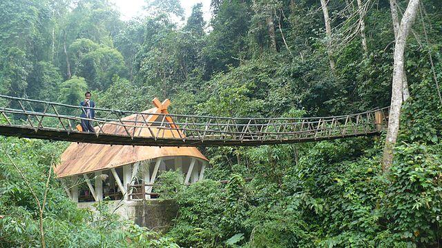 Rainforest of Xishuangbanna