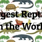15 Largest Reptiles in the World
