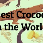 5 Largest Crocodiles in the World