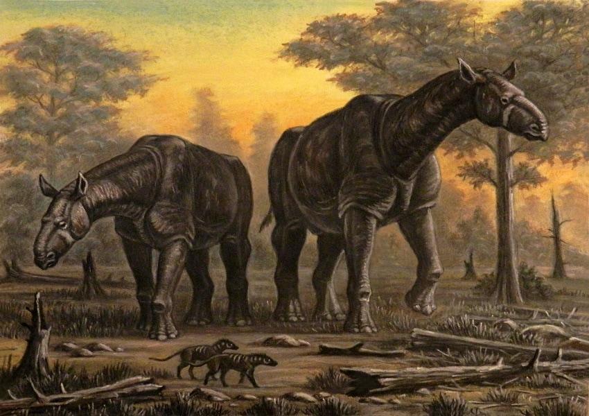 Indricotherium (Paraceratherium)
