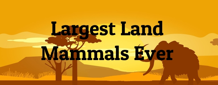 Largest Land Mammals Ever