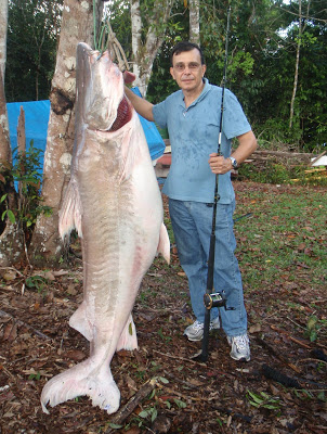 7 Largest Catfish Ever Caught Largest Org
