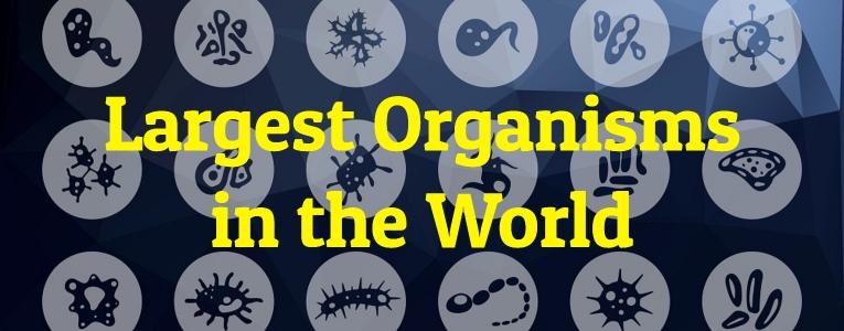 Largest Organisms