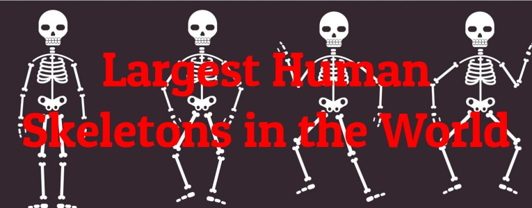 largest-skeletons
