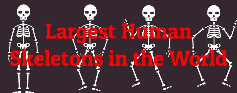 largest-skeletons