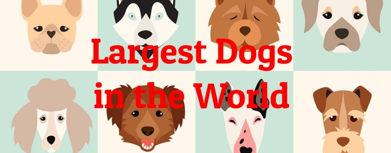 largest-dogs
