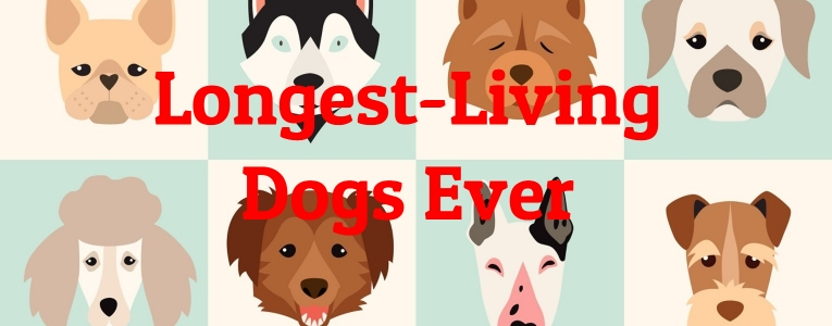 living-dogs