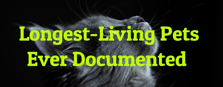 Longest-Living Pets Ever Documented